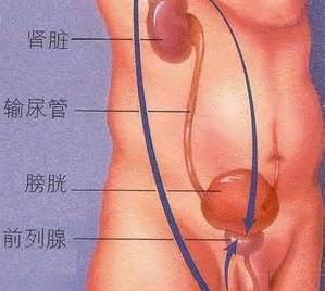 苏州男性前列腺囊肿有哪些主要表现?