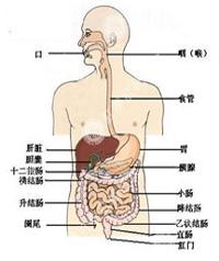直肠炎的症状有哪些